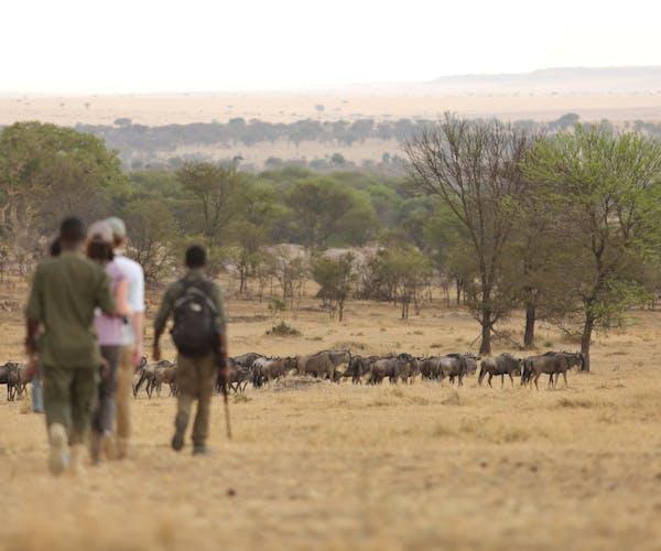 Sayari Camp Wildebeest