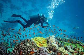 Scuba Diving South Africa Tours 1