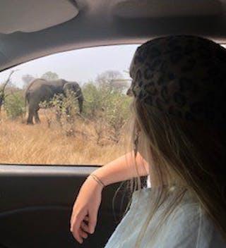 Self Drive Safari Emily Watching An Elephant