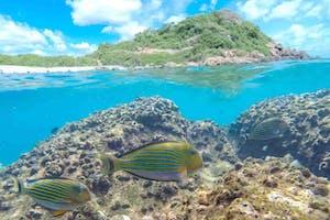 Snorkelling At  Pigeon  Island  Trincomalee