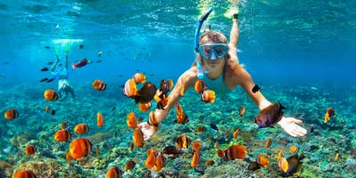 Snorkelling Over Coral Reefs