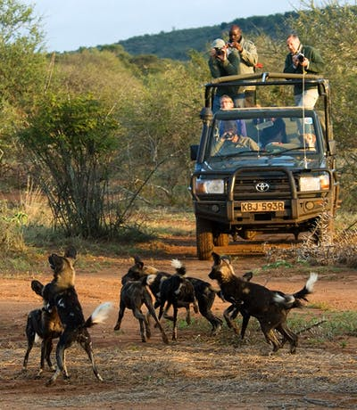 Sosian Lodge Safari Wild Dogs