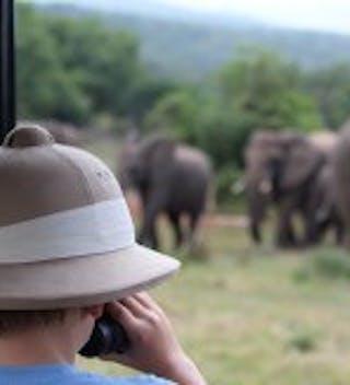 Spotting Some Beautiful Elephants