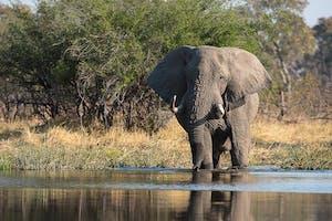 Sunway  Botswana Moremi  Bruce Taylor