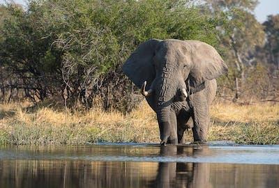 Botswana Moremi - Bruce Taylor