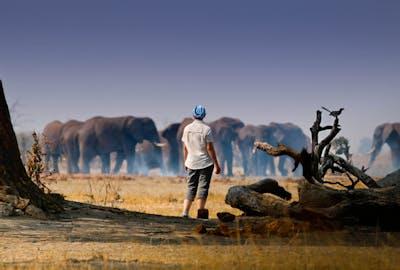 Botswana Savuti - Jez Hollinshead