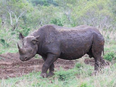 Swaziland Extra