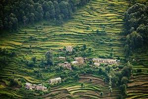 Terraced Fields Of Wheat