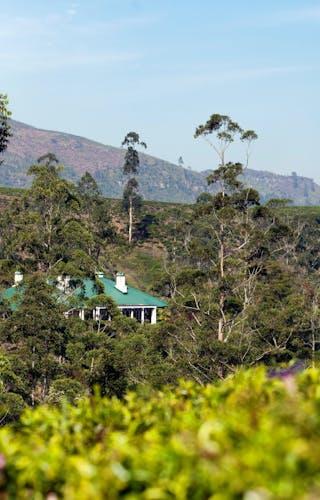 Tientsin Bungalow With Adams Peak In The Distance