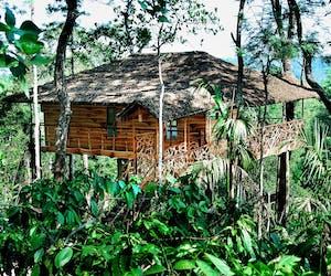 Tranquil Resort Treehouse