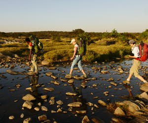 Trekking Safari In The Serengeti With Wayo