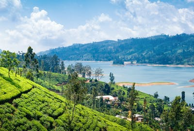 View From Tea Plantation Near Nuwara Eliya