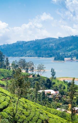 View From Tea Plantation Near Nuwara Eliya