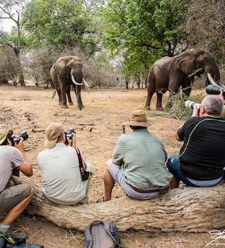 Vundu Camp Elephants On Foot