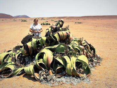 Welwitchia Namibia Swakopmund