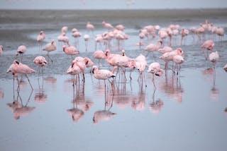Walvis Bay Birding