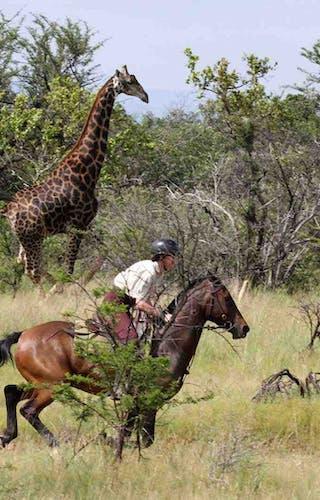 Waterberg Safaris