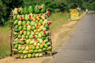 Watermelons In Malawi