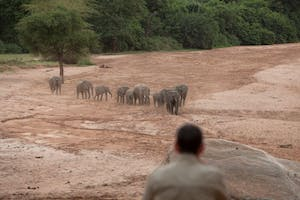 Wayo Elephants In Manyara
