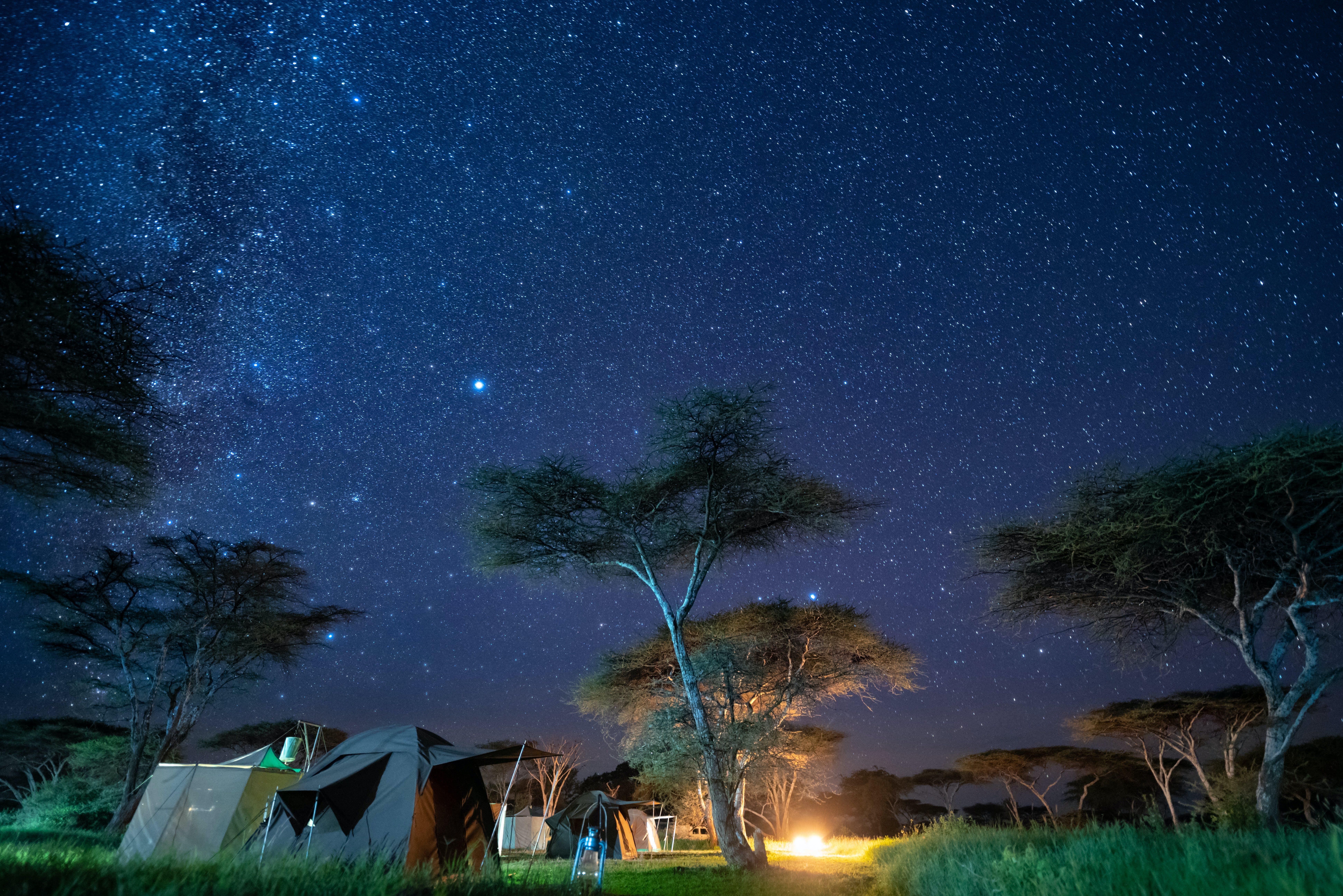 Wayo Walking Safari