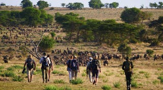 Wayo Walking In Serengeti