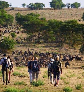 Wayo  Walking In  Serengeti