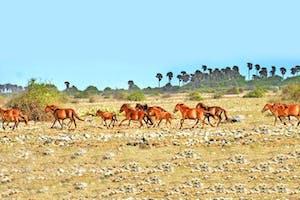Wild Horses On  Delfts  Island
