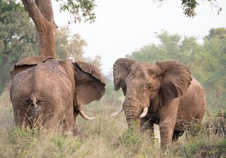 Wilderness Photography Course Makuleke Elephants