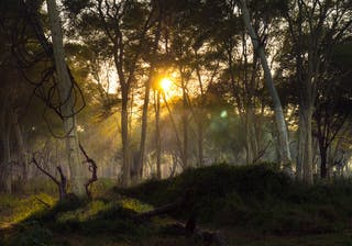 Wilderness Photography Course Makuleke Forest Light