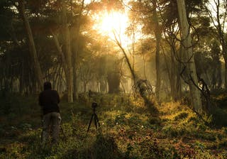Wilderness Photography Course Makuleke Forests At Dawn