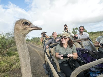 Wilderness Photography Course Meeting An Ostrich In Makuleke