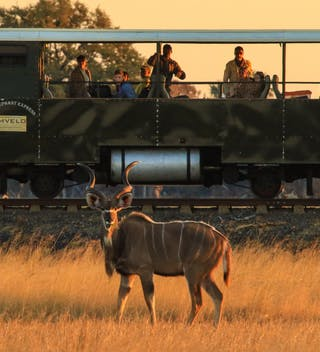 Wildlife Viewing On The Elephant Express