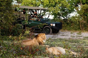 King Lewanika Game Drive Lion