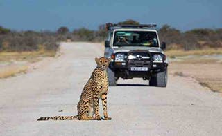 Africa Namibia Game Trails Self Drive