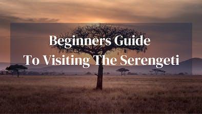 Beginners Guide To Serengeti
