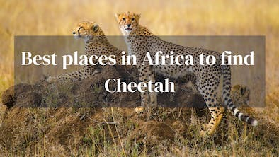 Best Places To Find Cheetah