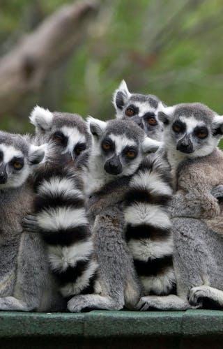 Best Time Visit Madagascar