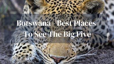Big Five Botswana