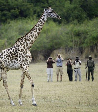 Bilimungwe Walking Safari