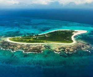 Bird Island Island