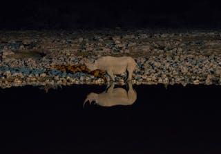 Black Rhino Night Etosha Waterhole Park Site