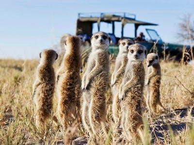 Botswana Makgadikgadi Pans San Camp Family Of Meerkats