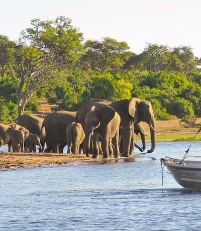 Botswana Chobe - Christian Hertel
