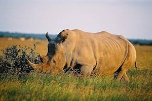 Sunway  Botswana  Khama  Sanctuary Rhino