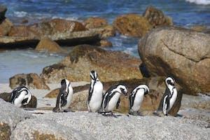 Sunway  South  Africa  Boulders  Beach Penguins