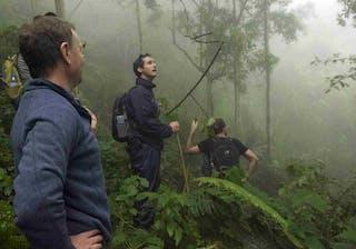 Chimp Trekking Thomson