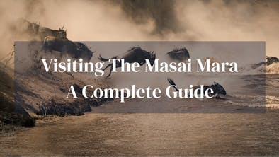 Complete Guide To Masai Mara
