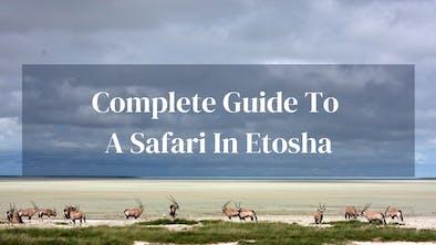 Complete Guide To Safari In Etosha