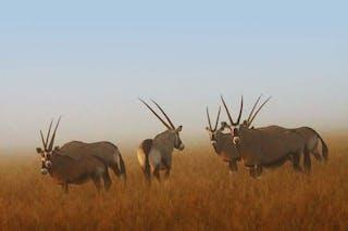 Deep Kalahari 1
