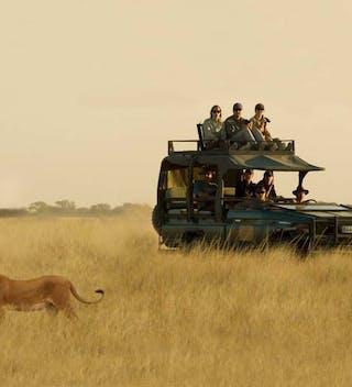 Deep Kalahari Lion